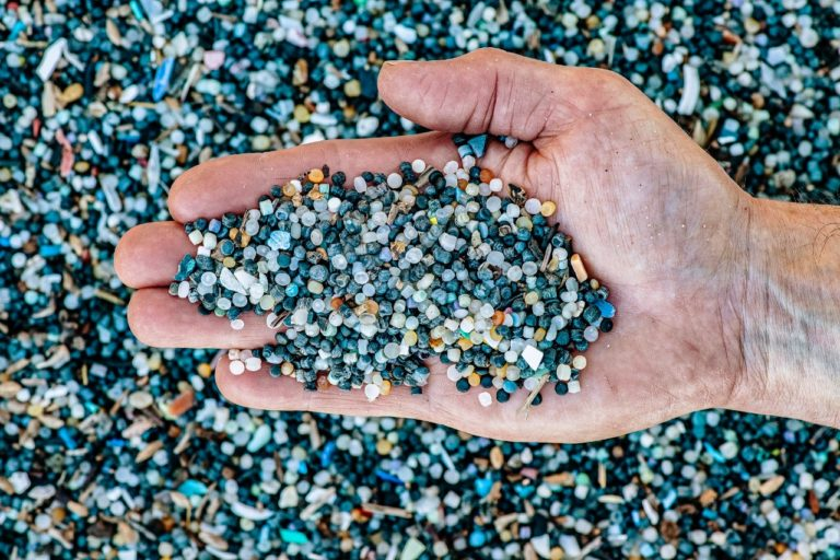 océanos plásticos y basura marina Los microplásticos son ingeridos por las especies marinas: foto WWF.