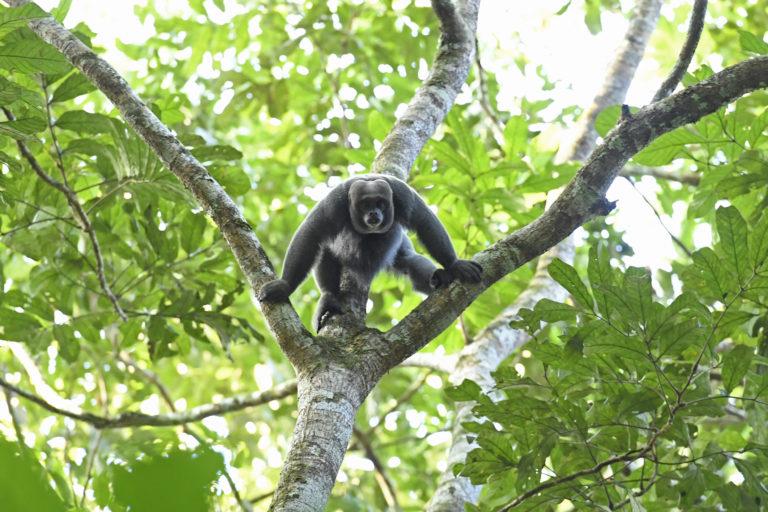 Los investigadores aseguran que faltan más estudios sobre la biodiversidad que termina afectada por los incendios en la Amazonía colombiana. Foto: Jorge Contreras.