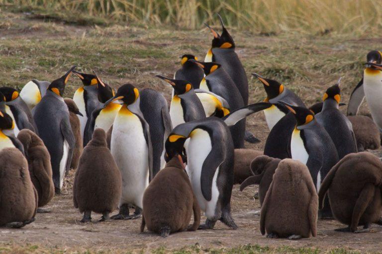 Foto: Red Observadores de Aves