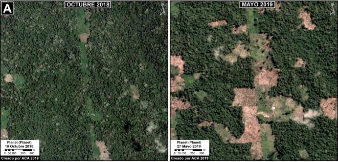 Imágenes satelitales muestran la deforestación en el Bosque Macuya. Fuente: MAAP.