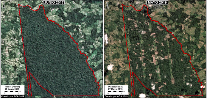 Más de 500 hectáreas han sido deforestadas en el Bosque Macuya. Fuente: MAAP.