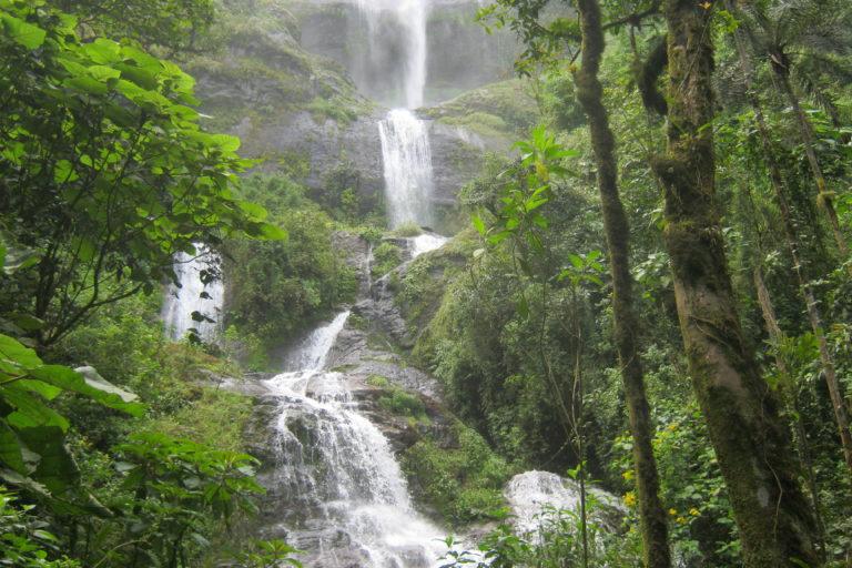 Los bosques de Udima son una fuente de agua importante para los pueblos costeños. Foto: Aníbal Calderón.