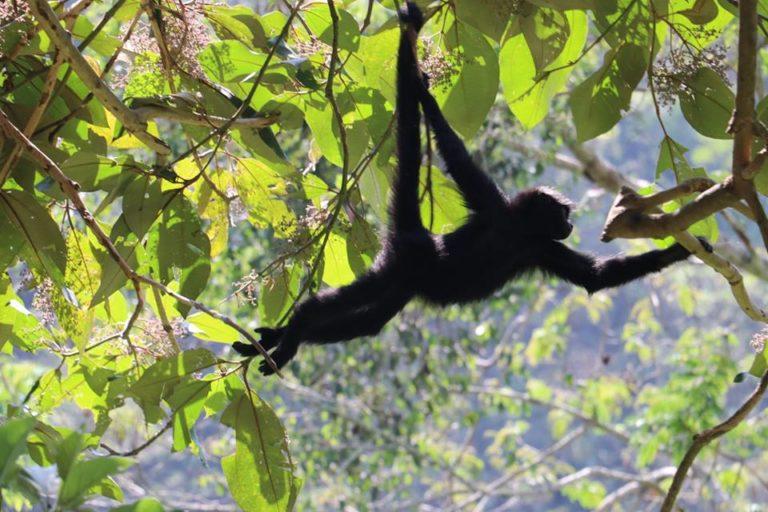 Los monos viven completamente libres en el refugio Senda Verde. Foto: Senda Verde.
