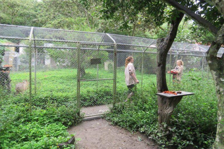 La llamada jaula para humanos es un corredor que ofrece seguridad a los visitantes. Foto: Senda Verde.