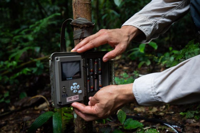 Se instalaron 129 cámaras trampa en las tres áreas protegidas de zona de frontera. Foto: Diego Pérez / WWF Perú.