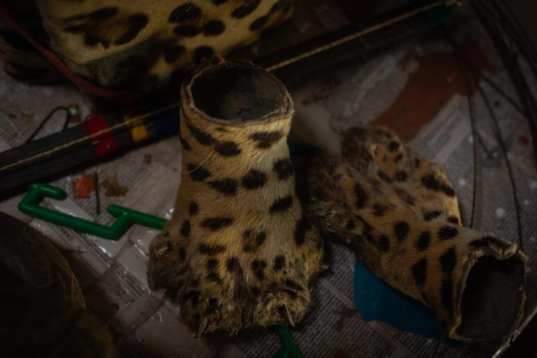 La caza ilegal va en aumento por la demanda de las partes de jaguar en el mercado asiático. Foto: Diego Pérez / WWF Perú.