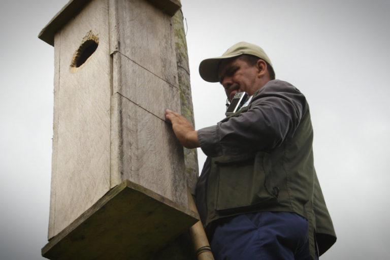 Las cajas nido se instalan para ofrecer un lugar seguro para la reproducción de las aves. Foto: Asociación Civil Armonía.