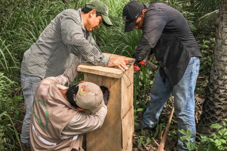 Este año se colocaron 27 cajas nido en el Área de Conservación Municipal Gran Mojos. Foto: Fundación para la Conservación Loros de Bolivia.