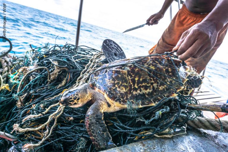 Las tortugas también son víctima de la peca incidental en el mar peruano. Foto: WWF Perú.