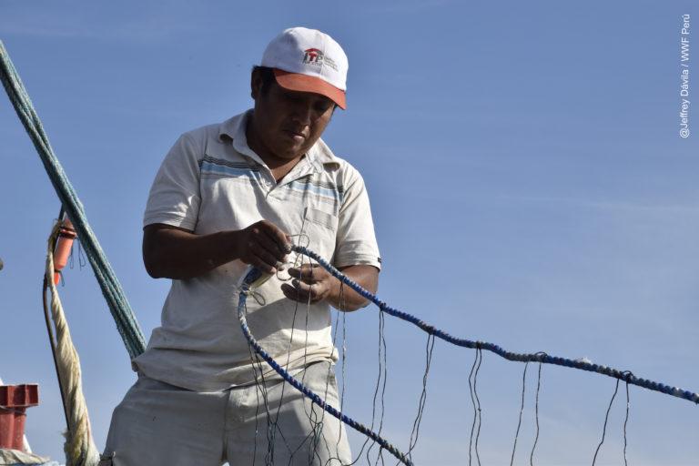 Pescadores artesanales e industriales participan de proyectos para reducir la pesca incidental. Foto: WWF Perú.