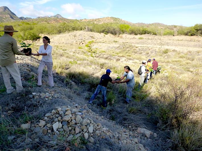 Las poblaciones locales también han participado en el trabajo de reforestación del hábitat de la cotorra. Foto: Provita.