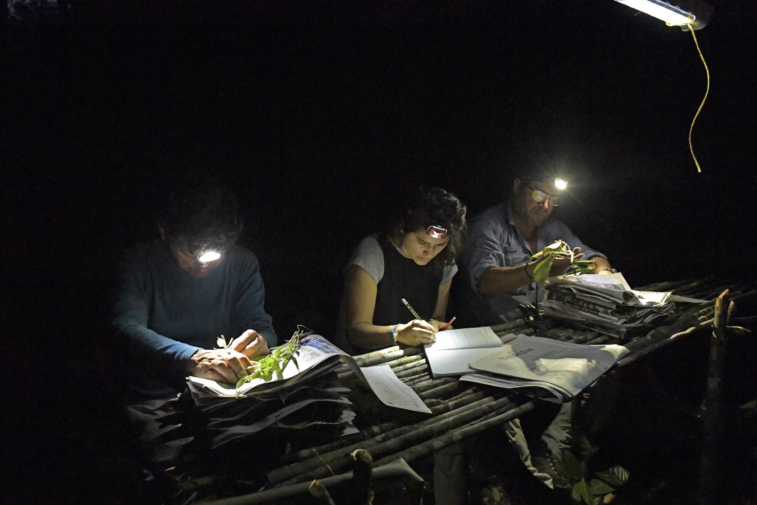 Apaporis Colombia. Biólogos registran los datos de las especies colectadas durante el día. Foto: Instituto SINCHI.