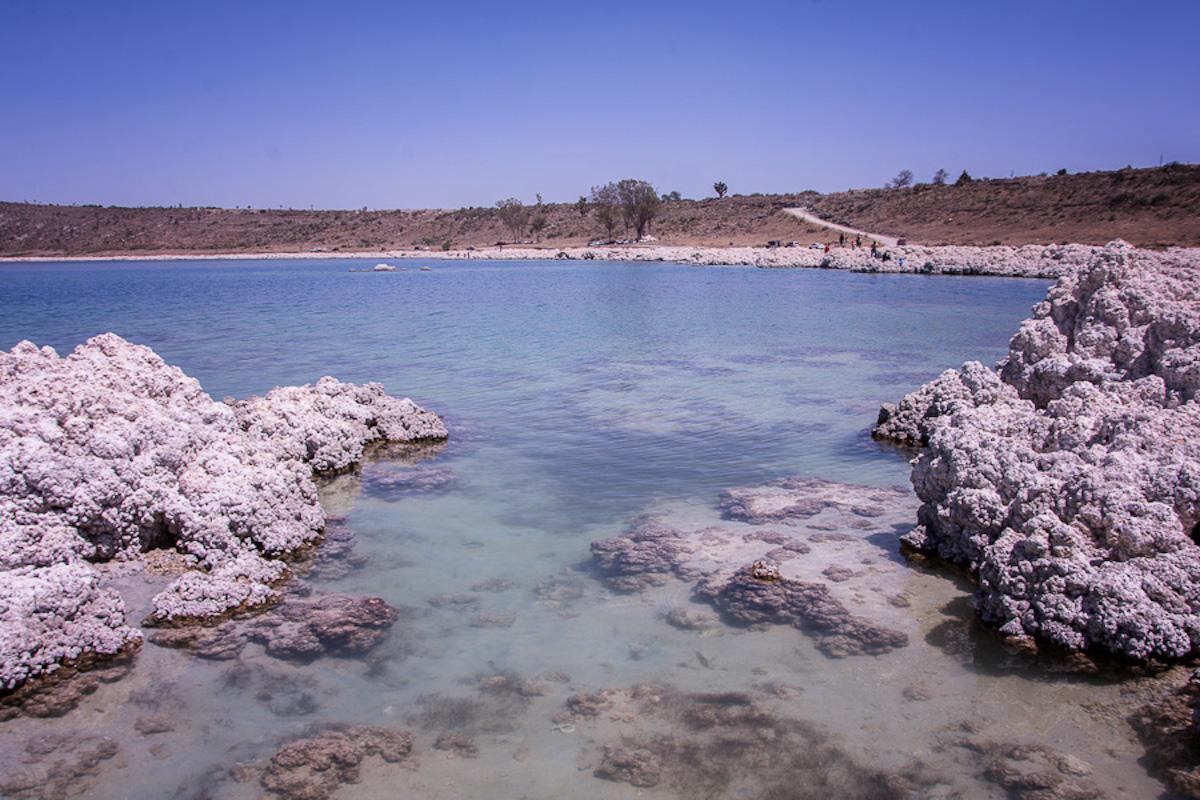 Los ejemplares para formar la colonia de aseguramiento fueron extraídos por etapas de la Laguna de Alchichica. Foto: Marlene Martínez.