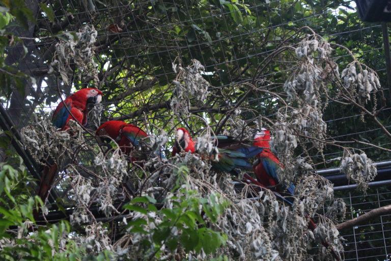 reinserción de especies en el Parque Nacional Iberá