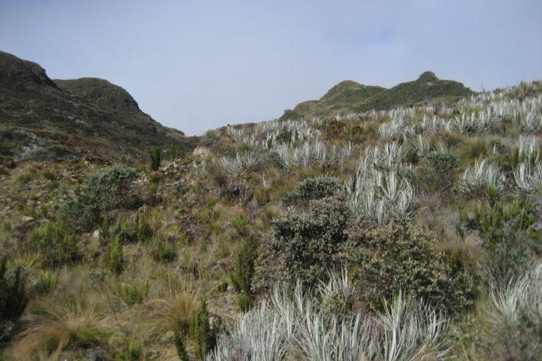 Áreas comunitarias de Ecuador. Los habitantes de la comuna utilizan 46 especies vegetales para uso alimenticio, medicinal y para rituales. Foto: NCI