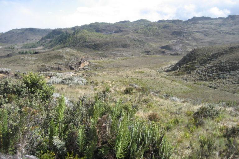 Áreas comunitarias de Ecuador. Los comuneros de la nueva área protegida se comprometieron a restaurar con vegetación natural zonas donde se ha sembrado pino. Foto: Universidad Técnica Particular de Loja.