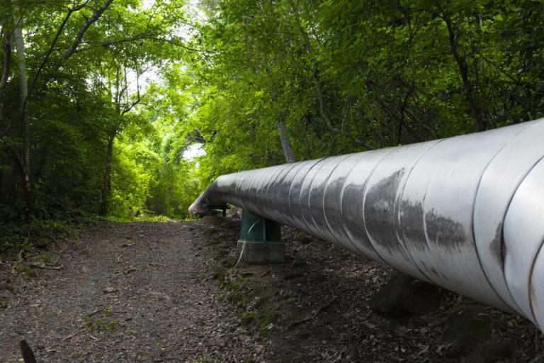 Bosque en campo geotérmico. La geotermia es una de las bases de la matriz eléctrica de Costa Rica para evitar el uso de combustibles fósiles. Foto: Nina Cordero.