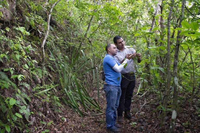 Bosque en campo geotérmico. El estudio de impacto ambiental del campo geotérmico, publicado en 1988, mencionaba que la cobertura forestal había disminuido a un 80% en 1967 y a un 68% en 1977. Hoy se ha recuperado. Foto: Nina Cordero.