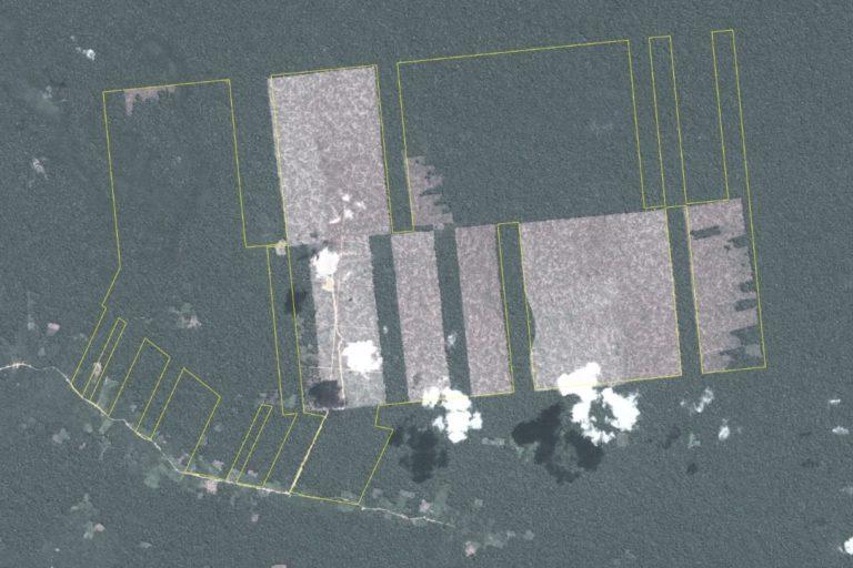 Vista satelital de la deforestación en Tamshiyacu. Foto: MAAP.