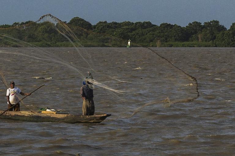Peces de agua dulce en Colombia. Pesca con atarraya en el río Magdalena. Foto: Juanerre / Flickr.