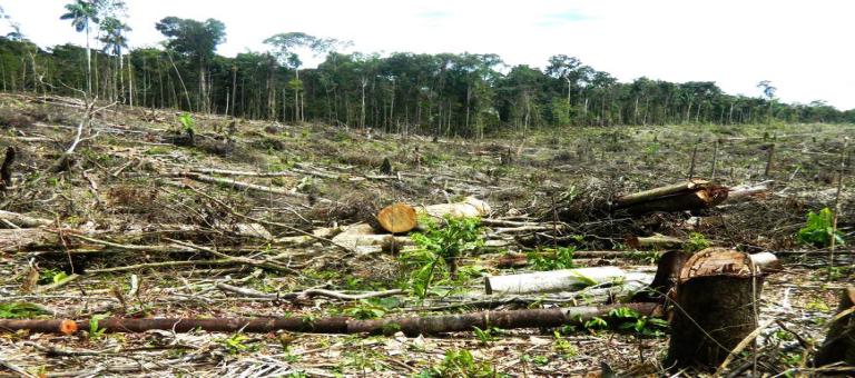 Bosque deforestado en Tamshiyacu. Foto: FEMA Loreto.
