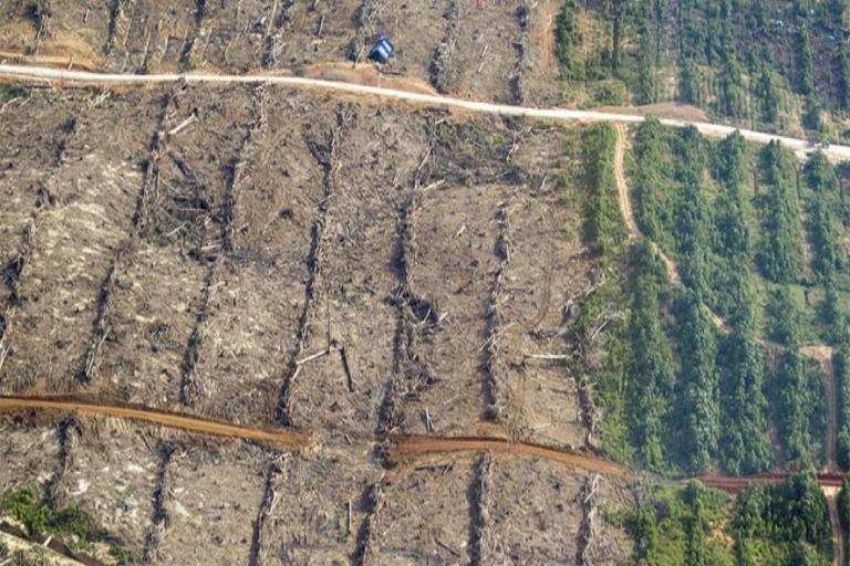En Tamshiyacu se deforestaron alrededor de 2000 hectáreas de bosques. Foto: FEMA.