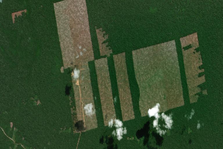Peru sentencia Dennis Melka Imagen satelital que muestra el avance de la deforestación en Tamshiyacu. Fuente: MAAP.
