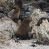 lobos marinos punta san juan