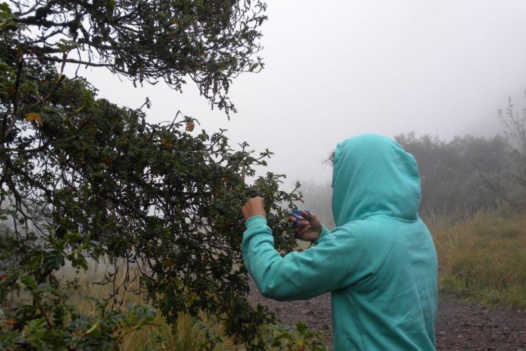 Mujeres en la ciencia. Claudia Segovia cree que aún falta mucho estudio e interés en las plantas. Foto: Claudia Segovia.
