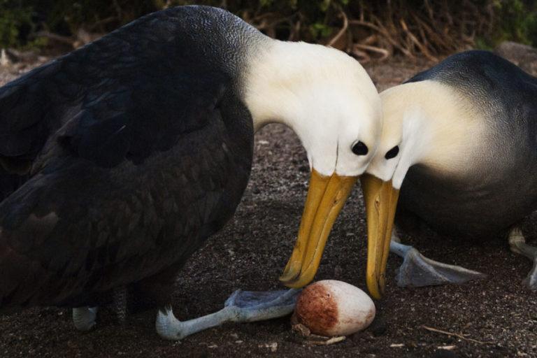 Galápagos verá afectados sus ingresos económicos por la ausencia de visitas. Foto: GoGalápagos Ecuador.