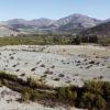 expansión de paltos en Chile