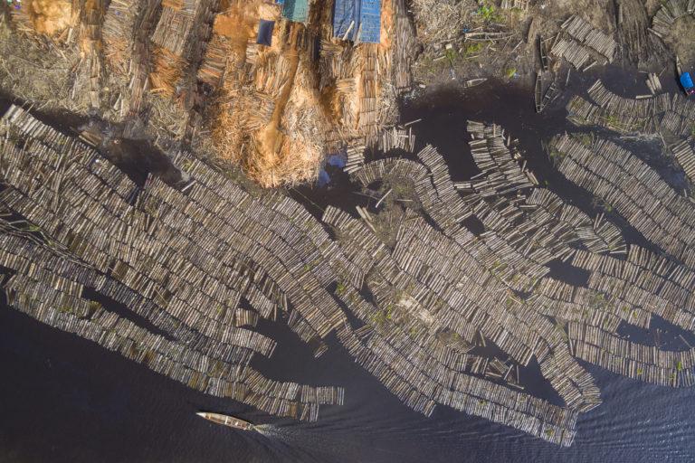 Regentes forestales forman parte de redes de lavado de madera en la Amazonía peruana. Foto: EIA.