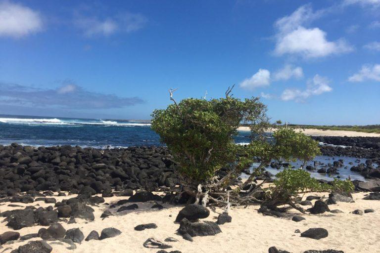 Conservación del petrel de galápagos. Playa en las islas Galápagos. Foto: Belén García - Fundación Jocotoco.