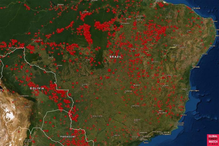 incendios brasil amazonía Mapa de incendios que muestra los fuegos activos en Brasil hasta 13 de agosto. Cortesía: Global Forest Watch (GFW).
