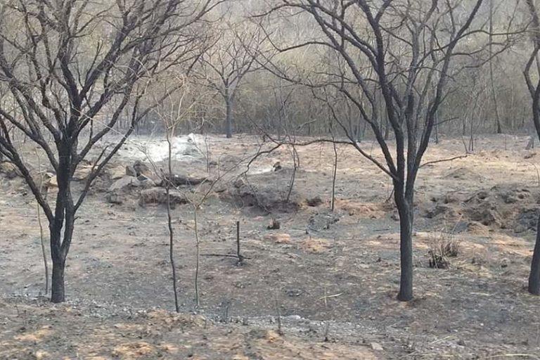 bolivia deudas ambientales 2019 Incendios forestales también afectaron áreas naturales protegidas. Foto: Fundación Nativa.