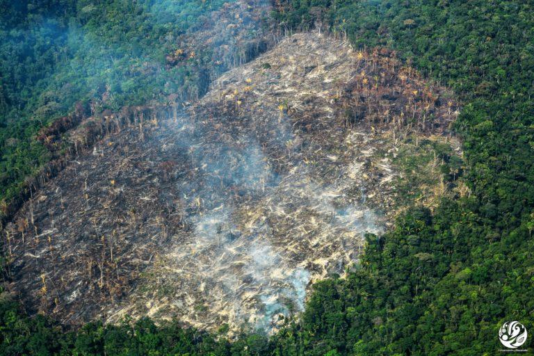 Los incendios forestales son otra causa de deforestación. Foto: Fundación para la Conservación y el Desarrollo Sostenible (FCDS).