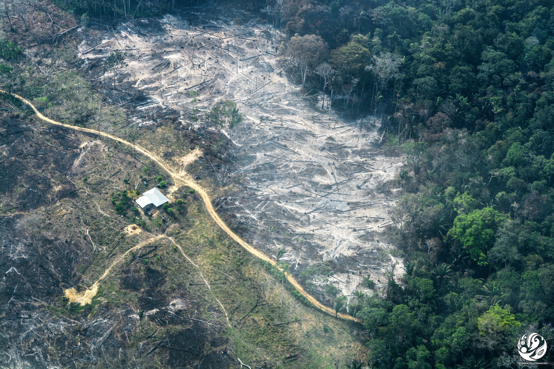 Deforestación parque Tinigua. Quemas y vías en medio de la Amazonía. Foto: Fundación para la Conservación y el Desarrollo Sostenible (FCDS).