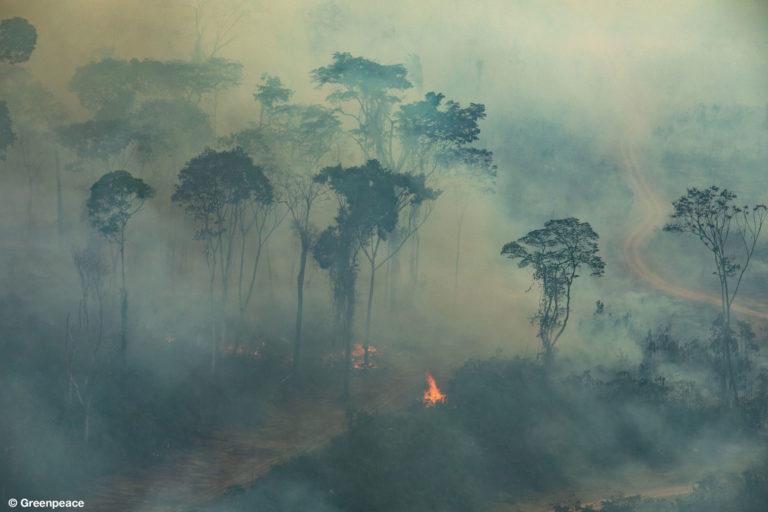 Incendios forestales Amazonia Vista aérea de los incendios en Porto Velho, estado de Rondonia, Brasil, Foto: Victor Moriyama / Greenpeace.