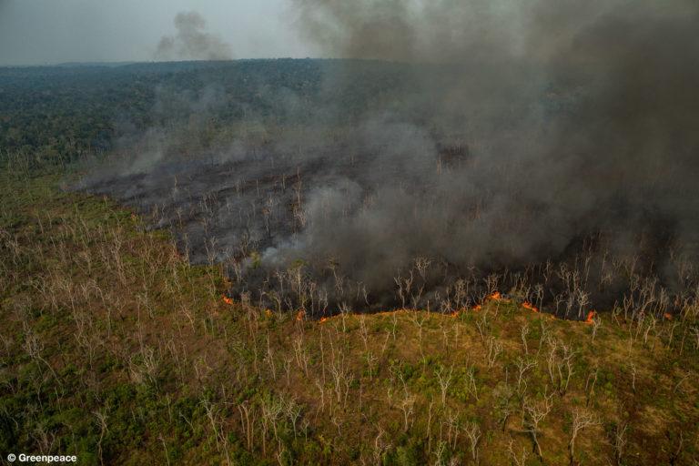 Incendios forestales Amazonía Imágenes aéreas muestran la devastación de la Amazonía brasileña ocasionada por los incendios forestales. Foto: Victor Moriyama / Greenpeace.