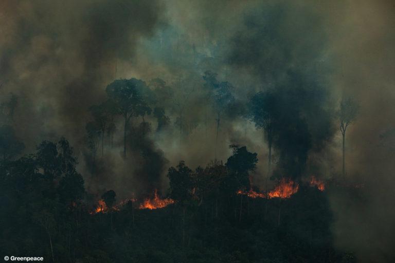 CANDEIRAS DO JAMARI, RONDONIA, BRASIL: Vista aérea de una gran área quemada en la ciudad de Candeiras do Jamari en el estado de Rondonia. (Fotografía: Victor Moriyama / Greenpeace).