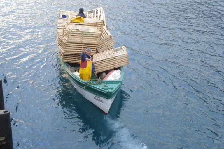 Las jaulas de madera son el mecanismo más sustentables que encontraron los pescadores. Foto: Universidad de Concepción
