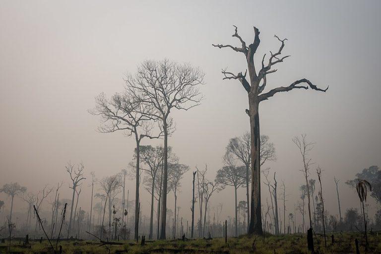 Deforestación en el bosque nacional Jamanxim, en el estado de Pará. Foto: cortesía de IBAMA.