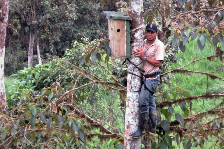 Conservación de aves en Ecuador. Caja nido que sirve para la reproducción del perico de orcés. Foto: Loegivildo Cabrera.