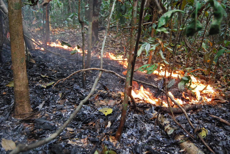 incendios brasil