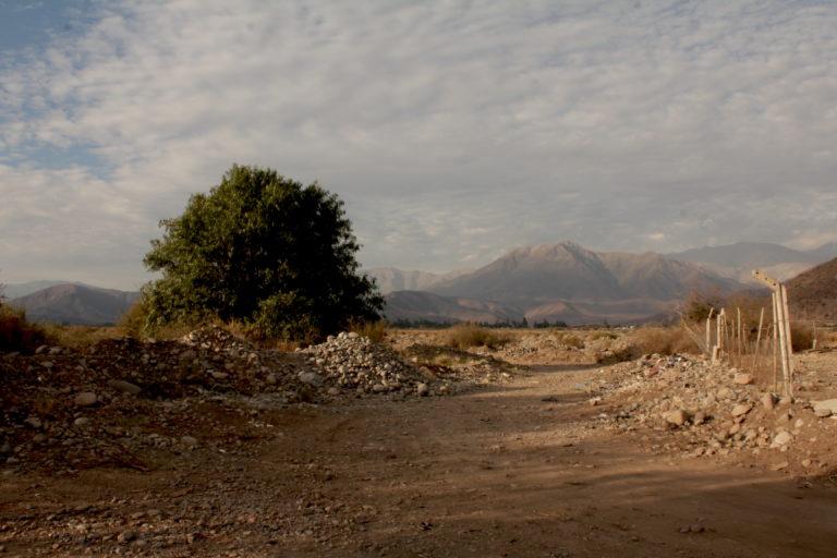 Sequía en Chile animales muertos en Putaendo
