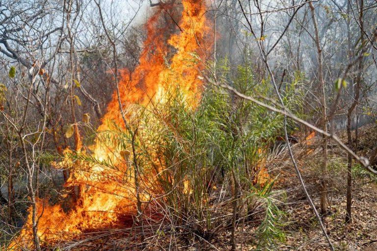 Los incendios forestales han destruido más de dos millones de hectáreas de cobertura vegetal y boscosa en Bolivia. Foto: Fundación para la Conservación del Bosque Chiquitano.