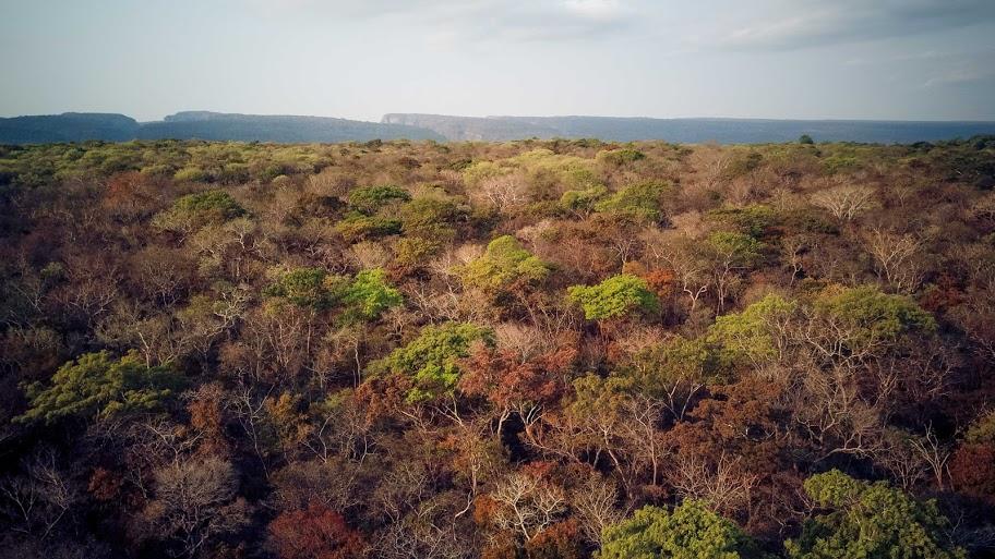 Bosque seco chiquitano en el área protegida Tunabaca. Foto: Daniel Coimbra.