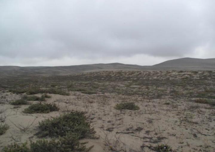 nuevas especies en Perú. La lagartija Liolaemus nazca habita en los agujeros de las lomas en Nazca. Foto: César Aquilar.