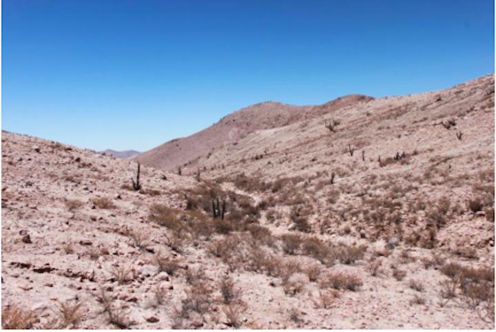 nuevas especies en Perú La Liolaemus chiribaya habita entre los 2600 y 3000 metros de altura. Foto: César Aguilar.