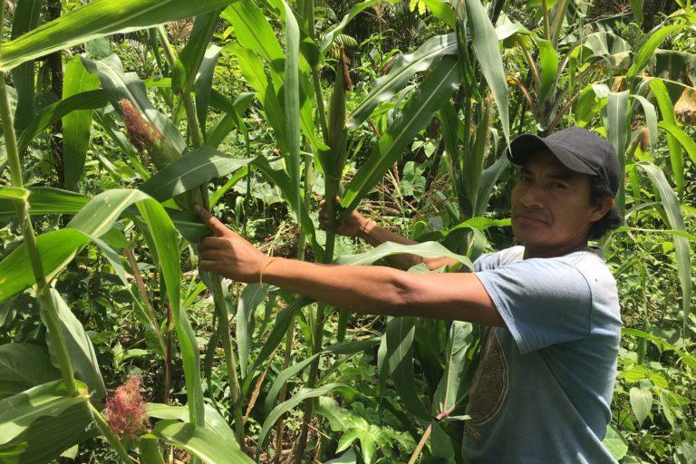 Guatemala agroforestería y sequía